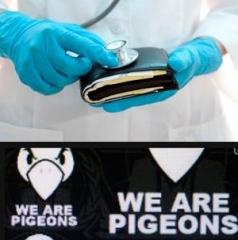 medecins-pigeons